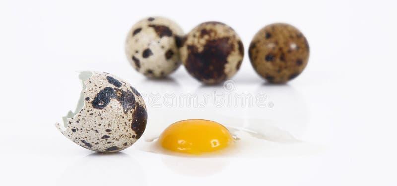 Uova di quaglia isolate nel fondo bianco immagine stock libera da diritti