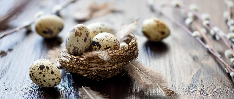 Uova di quaglia, piume, rami del salice su una tavola di legno Effetto d'annata fotografie stock libere da diritti