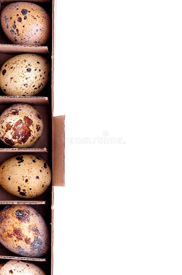 Uova di quaglia sulla scatola e sul fondo bianco fotografie stock libere da diritti