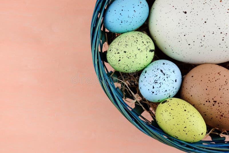 Uova di quaglia variopinte di Pasqua in canestro blu su un pallido - fondo rosa fotografia stock libera da diritti