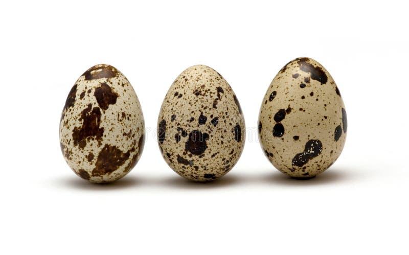 Uova di quaglie fotografia stock