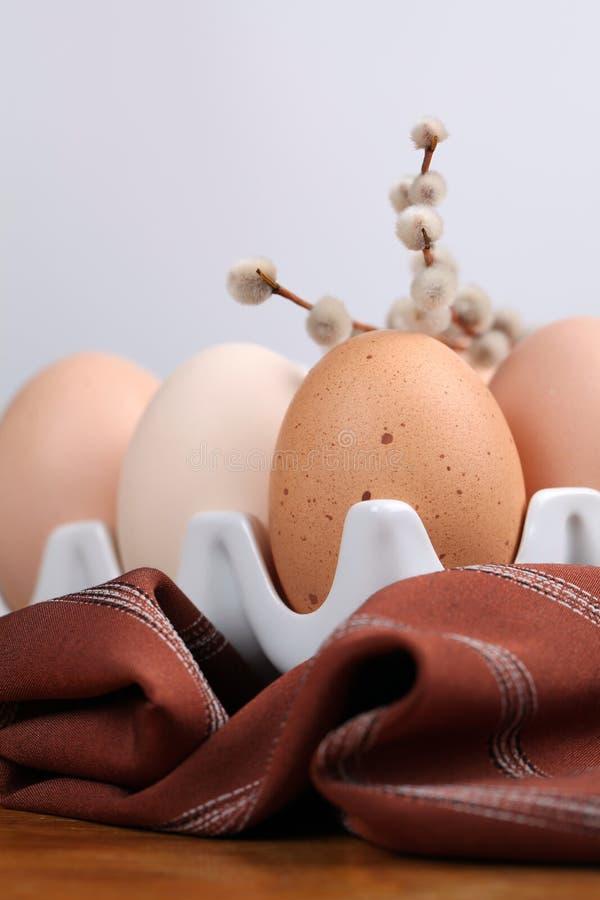 Uova e catkins del pollo fotografia stock libera da diritti