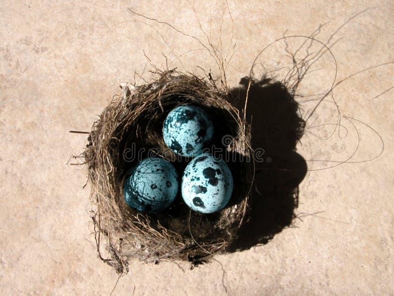 Uova e nido fotografia stock