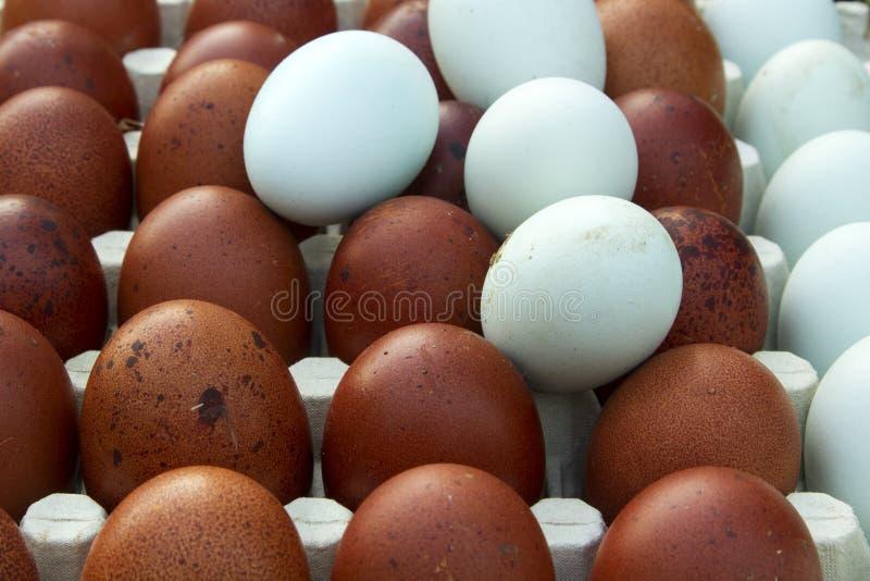 Uova ecologiche naturali di colore marrone e blu immagine stock
