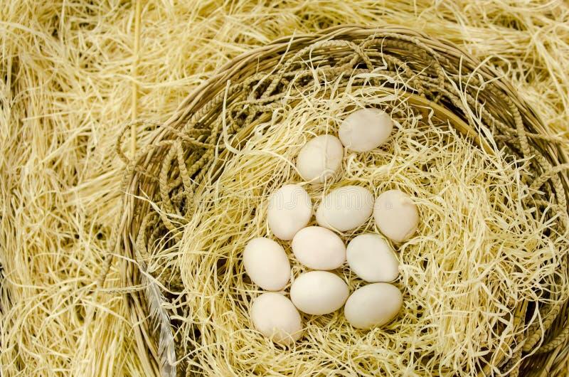 Uova nel nido nello sfondo naturale con lo spazio in bianco della copia fotografia stock libera da diritti