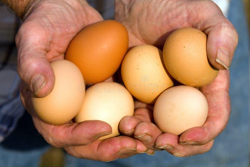 Uova organiche immagini stock