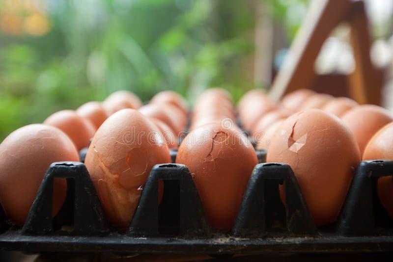 Uova rotte in uova del pannello fotografia stock