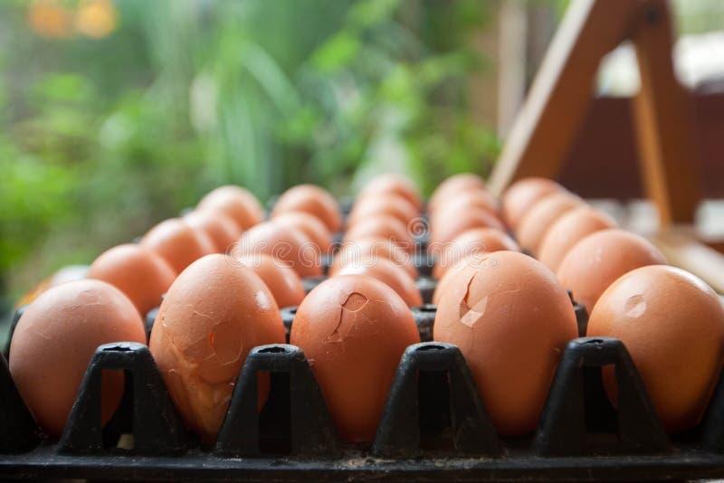 Uova rotte in uova del pannello immagini stock libere da diritti