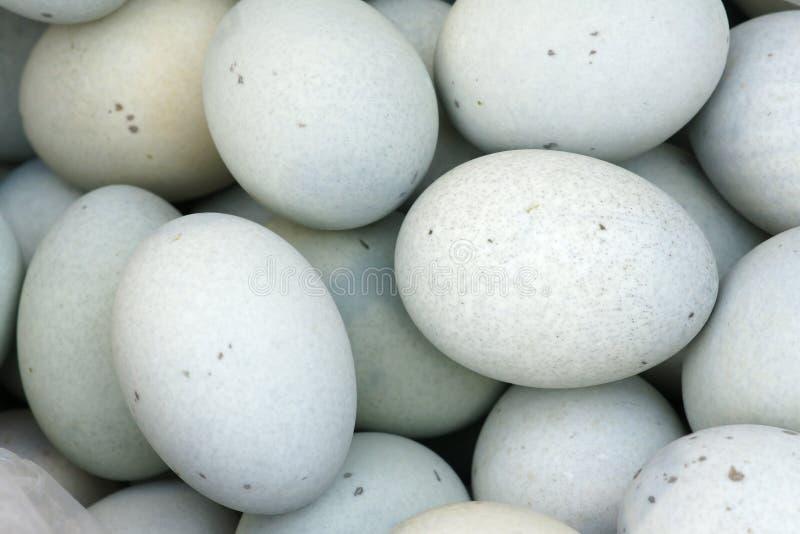 Uova salate dell'anatra fotografie stock