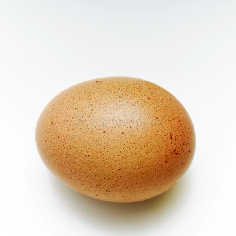 Uovo immagine stock