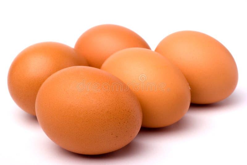 Uovo immagini stock libere da diritti