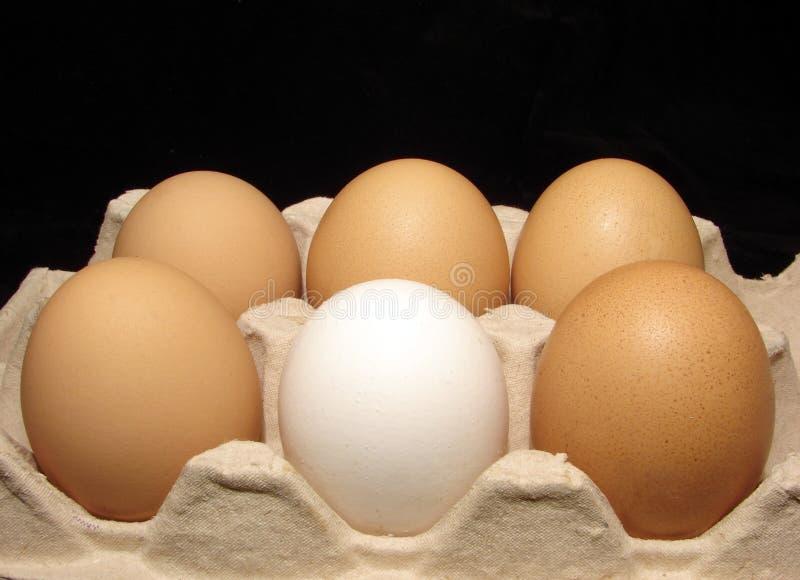 Download Uovo immagine stock. Immagine di bianco, vita, alimento - 3883361