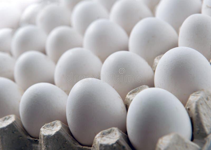 Uovo bianco del pollo in un contenitore di vassoio o del cartone della cassetta fotografie stock