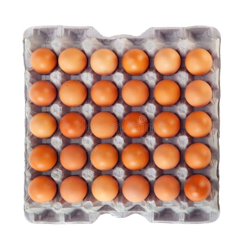 Uovo in contenitore di scatola fotografia stock libera da diritti