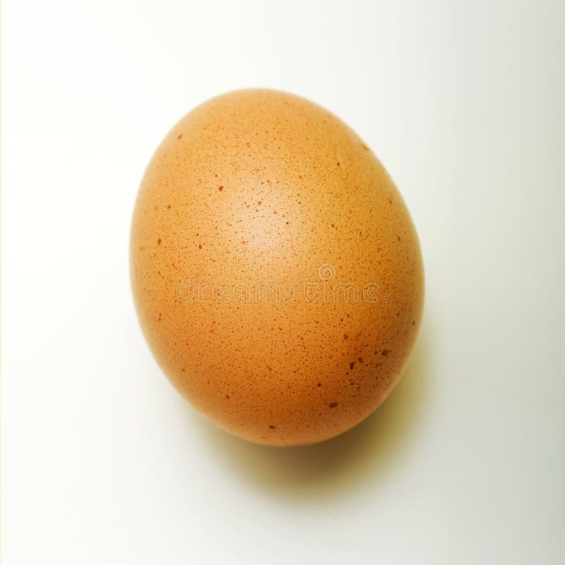 Uovo del pollo del Brown fotografie stock libere da diritti