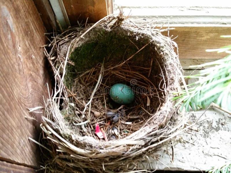Uovo dell'uccello fotografia stock libera da diritti