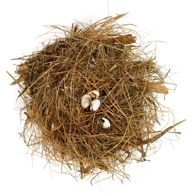 Uovo di nido rotto immagine stock libera da diritti