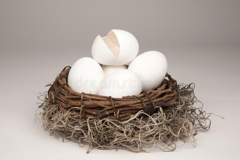 Uovo di nido rotto generico fotografie stock