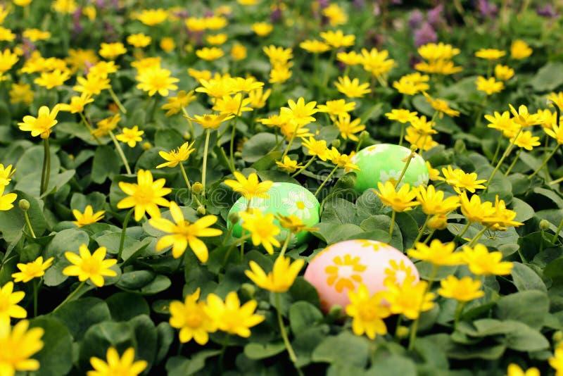 Uovo di Pasqua nascosto in un prato del fiore Caccia di tradizione e cercare le uova fotografie stock