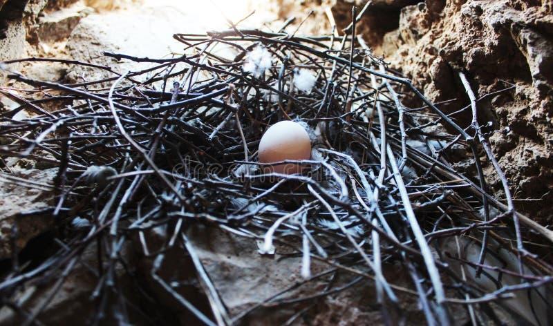 Uovo in nido fotografie stock
