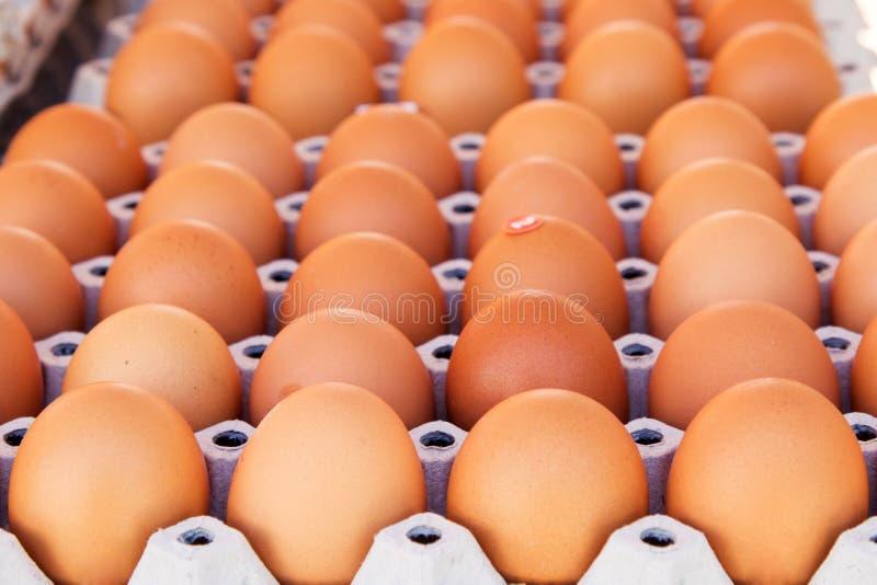 Uovo in pacchetto del contenitore di cartone immagine stock