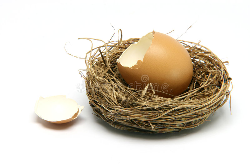 Uovo rotto in nido fotografie stock