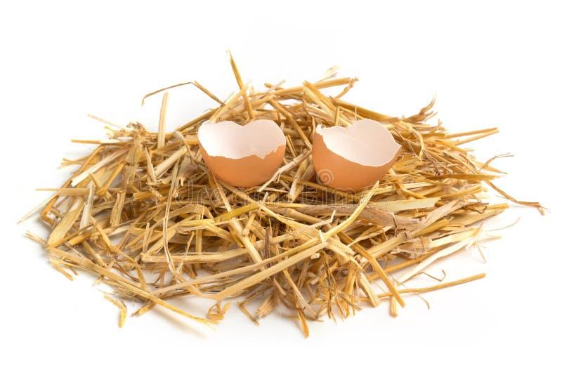Uovo rotto in un nido del fieno fotografie stock libere da diritti
