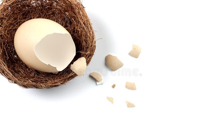 uovo rotto, uovo in nido su backgroune bianco immagine stock libera da diritti