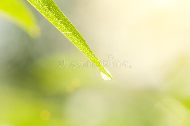 Uoyng green leave vith raindrop on bright green nature background. Spring koncept royalty free stock photography