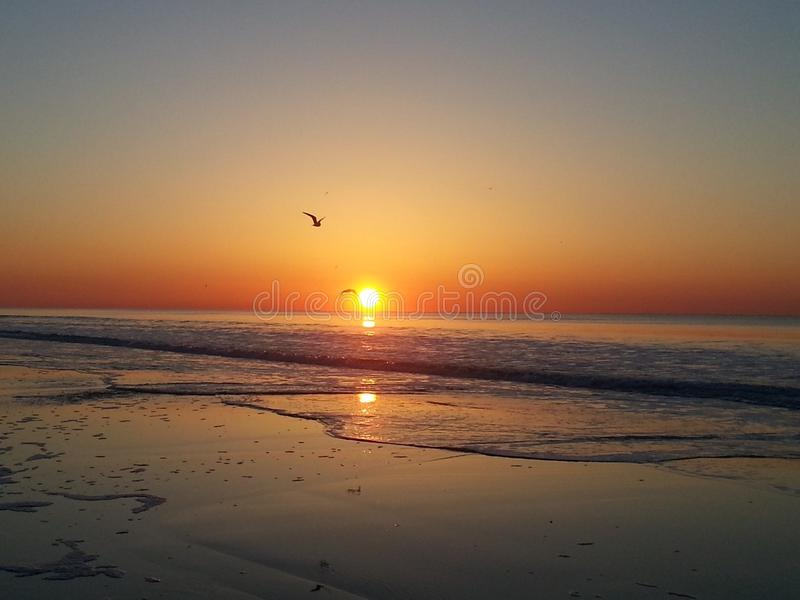 Up With The Birds To Catch Sunrise royalty free stock image