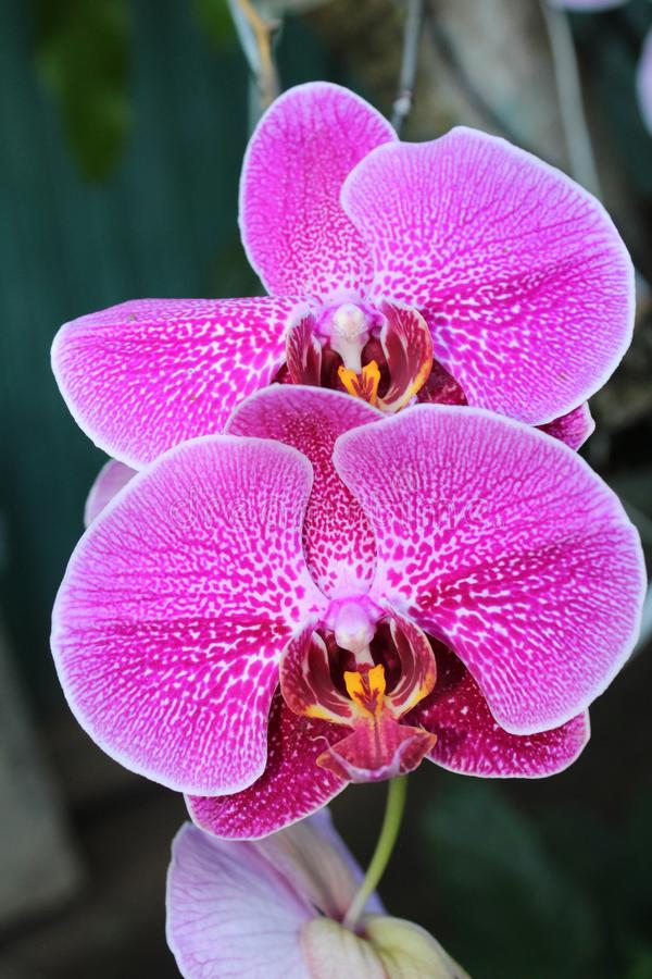 Up close orchid in nature stock images