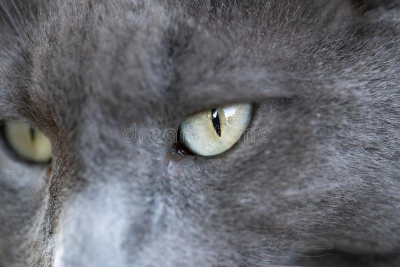 Up close shot of gray cat eye. stock photography