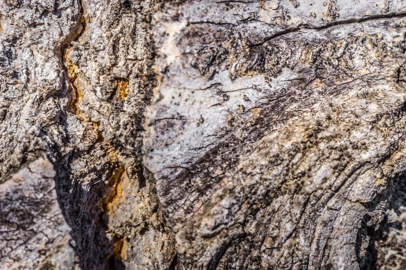 A macro shot of a tree trunk royalty free stock image