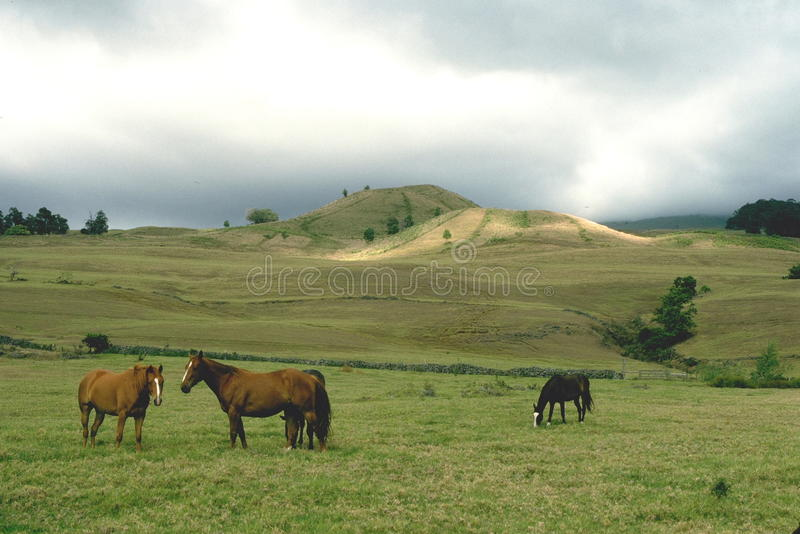 Download Up Country Maui Stock Photos - Image: 12737353