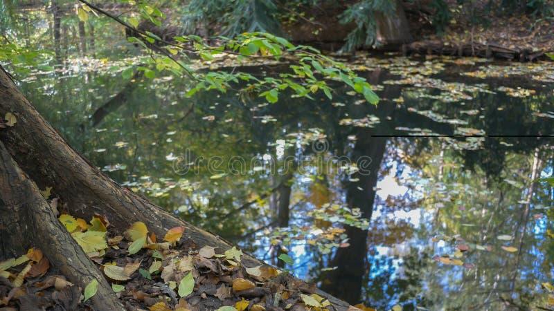 Upadłe Liście Pod Drzewem Na Lakeside Jesienią obrazy royalty free