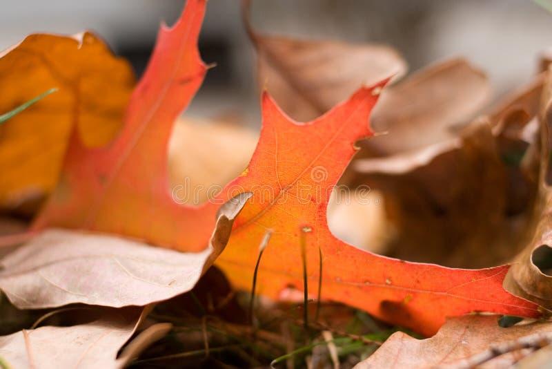 upadły liści jesienią obraz stock