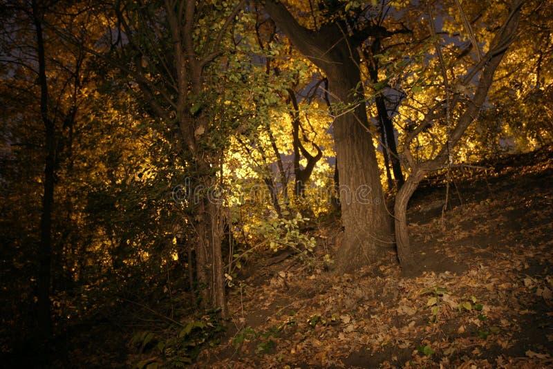 Download Upadek obraz stock. Obraz złożonej z drzewa, natura, wielki - 35151
