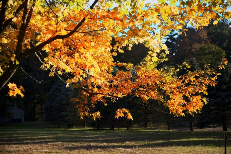 upadek drzewo zdjęcie royalty free