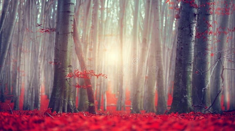 upadek Jesień krajobraz Piękny jesienny park z jaskrawymi czerwień liśćmi i starymi ciemnymi drzewami Piękno Natura fotografia royalty free