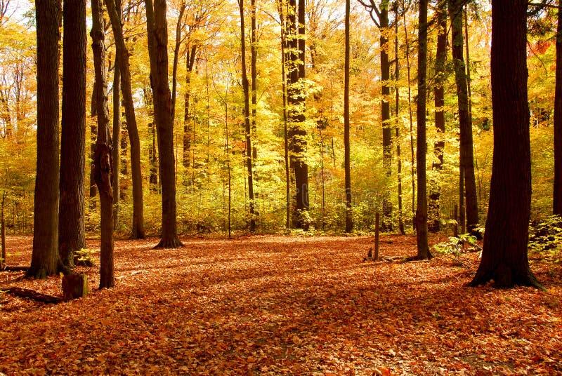 upadek lasów krajobrazu zdjęcie stock