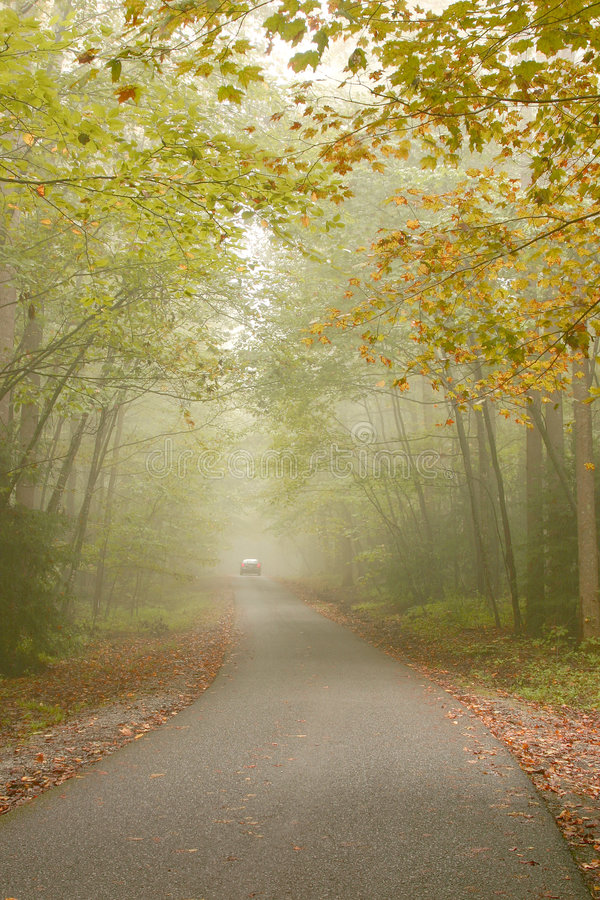 upadek mgła. zdjęcie stock