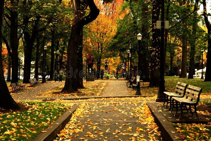 upadek park fotografia royalty free