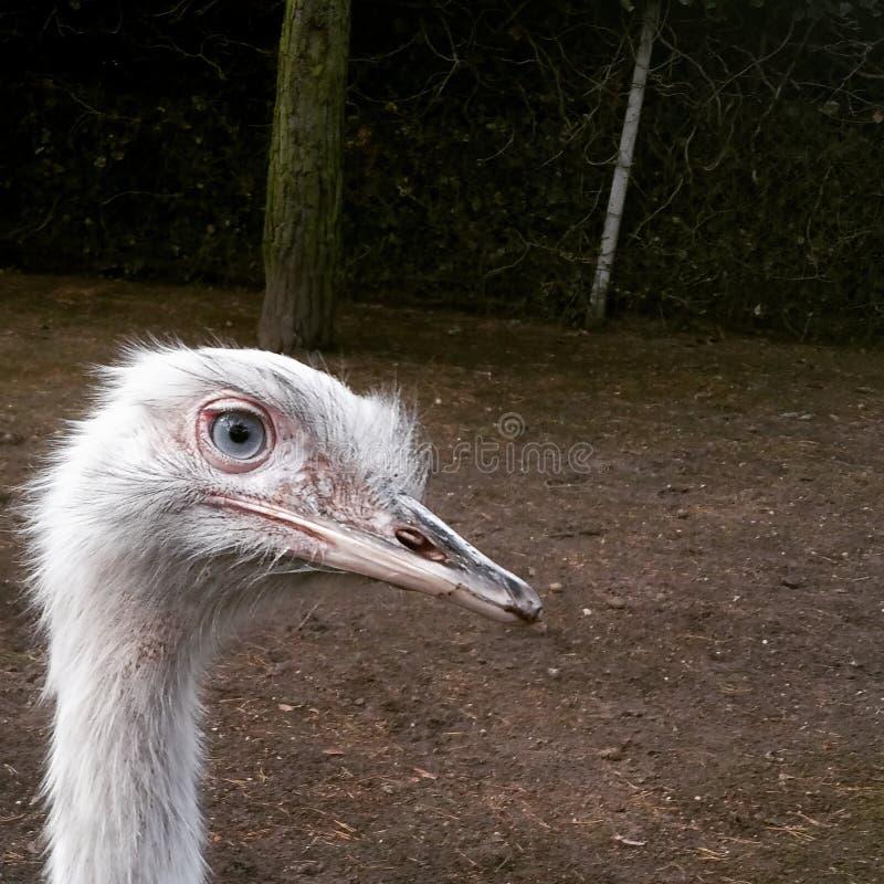 Upcloseandpersonal del pájaro que camina fotos de archivo