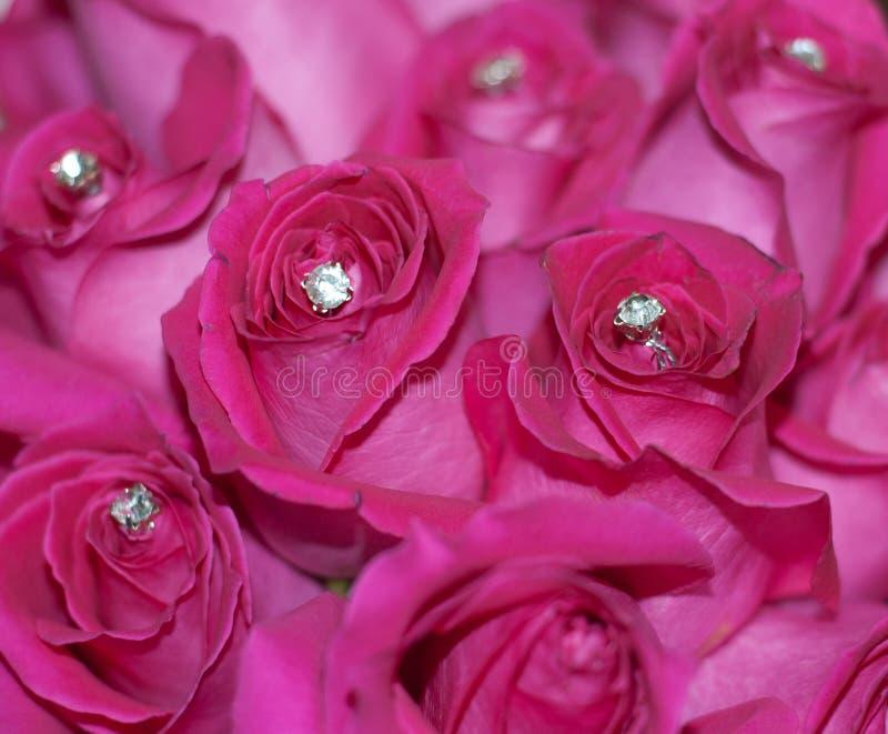 Upiększać róże fotografia royalty free