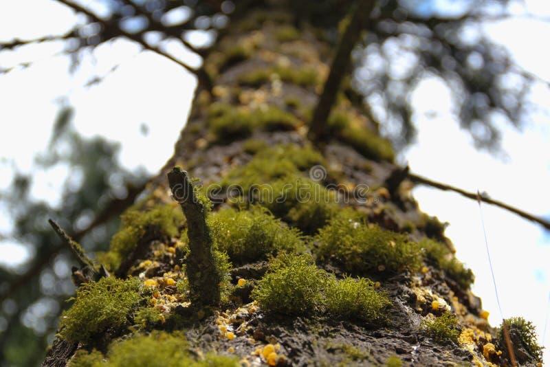 UPP ett mossigt träd arkivfoton
