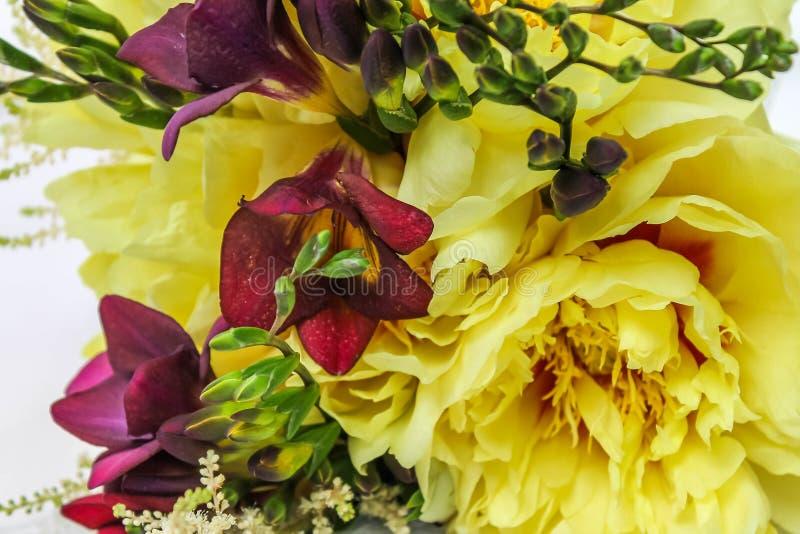 Upp för pionlilor för nära brud- bukett gul freesia fotografering för bildbyråer