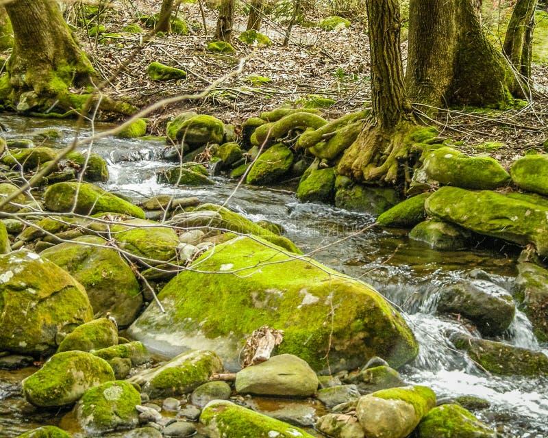 Upp nära med den lösa floden som flödar till och med Smokeysen, TN royaltyfria bilder