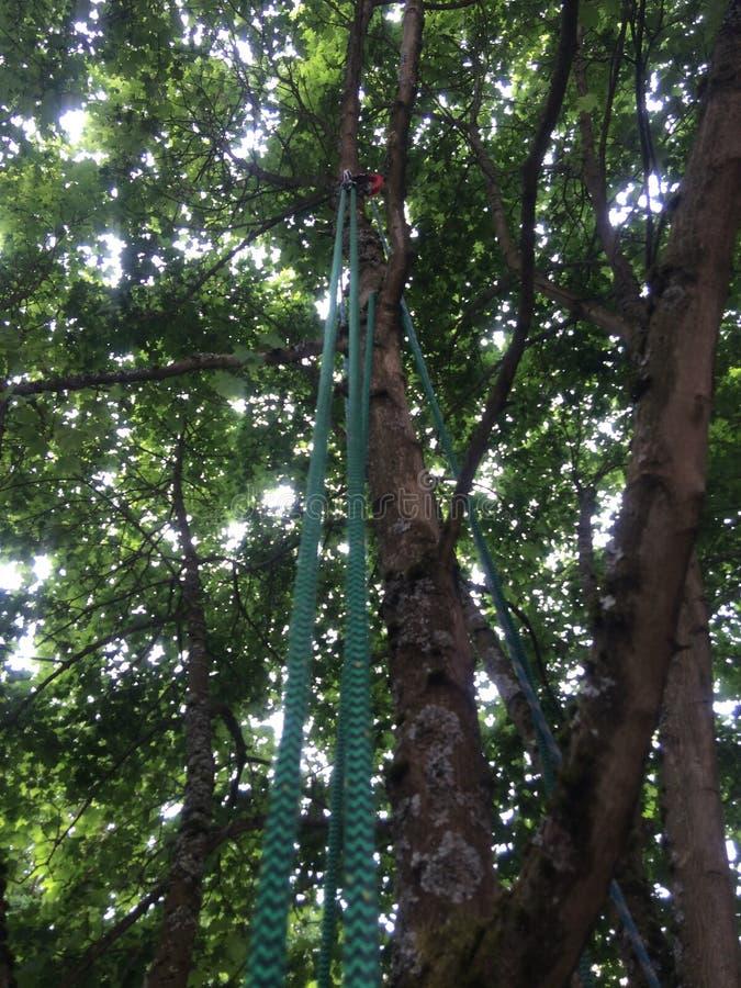 Upp trädet arkivbild