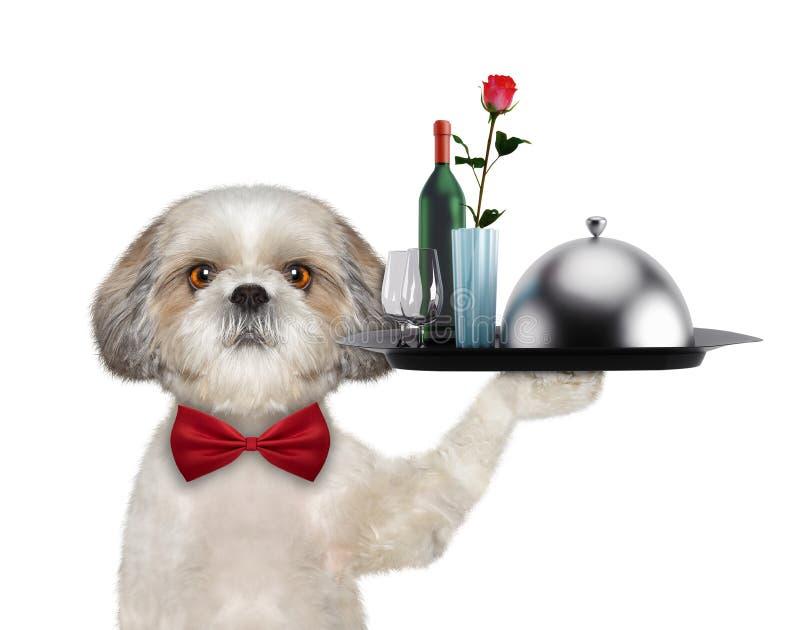 Uppassareshitzuhund med disk, vin och rosen Isolerat på vit vektor illustrationer