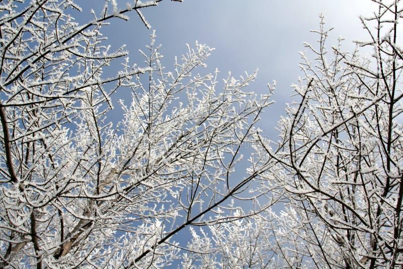 uppe i luften snöig filialer royaltyfria foton